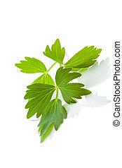 lubczyk, leaf.