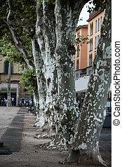 lucca, toscana, plaza, -, napoleone, vista