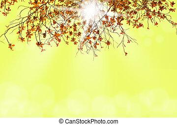 luce, bokeh, ramo albero, sfocato
