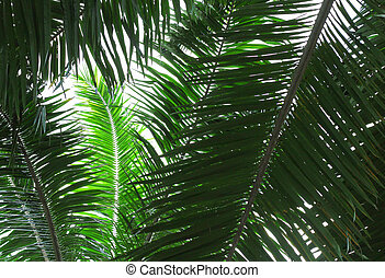 luce, palma, ramo, contro