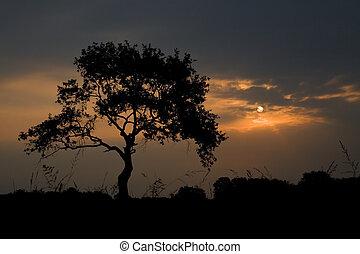 luce, silhouette, alba, albero