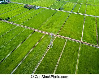 luchtmening, -, groene, paddy, velden