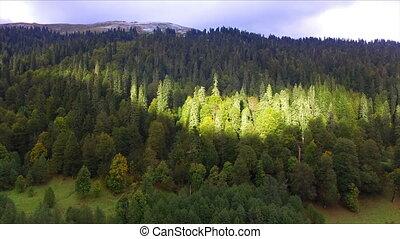luchtmening, op, wild, berg, bos