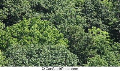 luchtmening, van, bos, hd