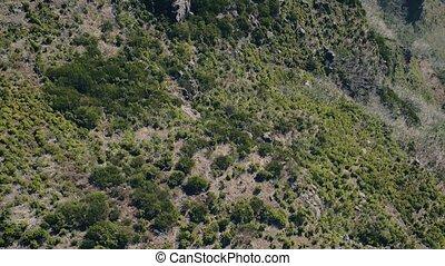 luchtmening, van, de, berg, evergreen, bos