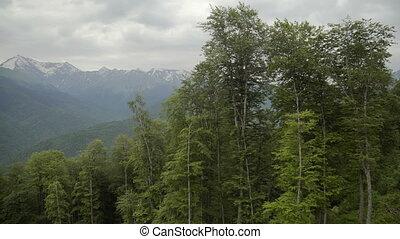 luchtmening, van, mooi, berg, en, mooi, bos
