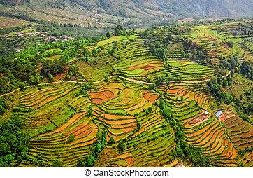 luchtopnames, kleurrijke, terrassen, akker, rijst, aanzicht