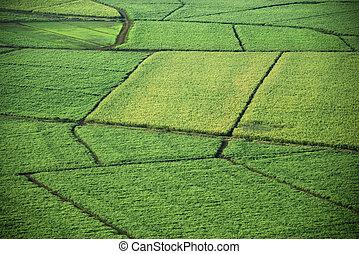 luchtopnames, van, oogst, fields.