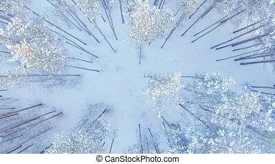 luchtopnames, winter, bevroren, bovenzijde, bos, vlucht