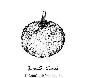 lucida, mano, feroniella, plano de fondo, fruits, dibujado, blanco