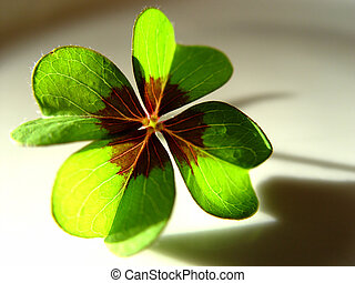 lucky clover - macro of a 4-leaf clover with sun and shadow ...