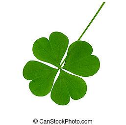 Lucky shamrock - Single lucky shamrock leaf isolated on...
