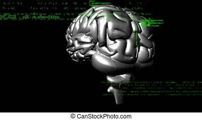 ludzki, cyfrowy, mózg