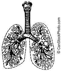 ludzki, płuca