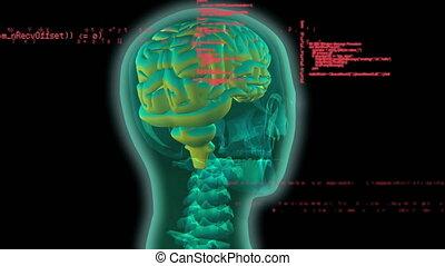 ludzki, palcowe ożywienie, mózg