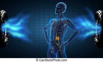 ludzki, radiografia, szkielet, skandować