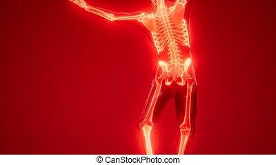 ludzki szkielet, radiografia, skandować, medyczny