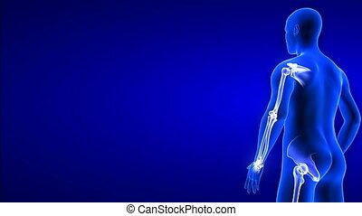 ludzkie połączenie, bok, ciało, obracający, pętla, anatomia, animacyjne tło, seamless, -, 3d, ból, skandować, close-up., render, błękitny, prospekt