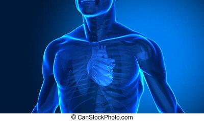 ludzkie serce, ogniskowany