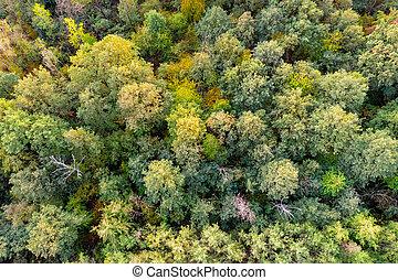 luftaufnahmen, oberseite, unten, ansicht, auf, herbst, forest.