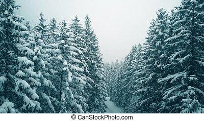luftblick, von, a, paar- wandern, in, verschneiter , winter, wald