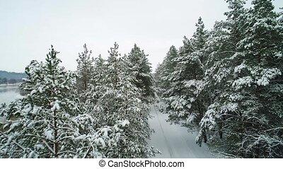 luftblick, von, winter, verschneiter , wald