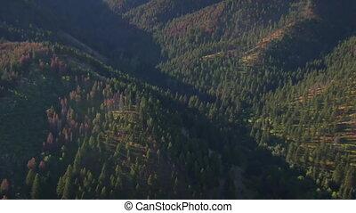 luftschuß, von, felder, und, wälder, mit, tote bäume