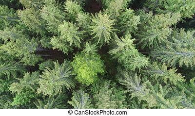 luftschuß, von, grüner wald