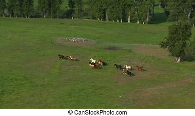 luftschuß, von, pferden, rennender , in, grün, tal