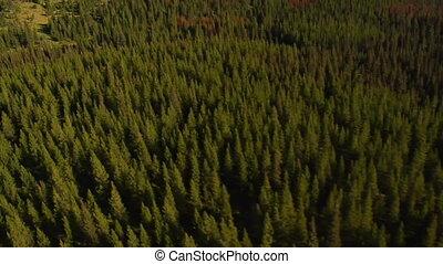 luftschuß, von, wald, und, berge, mit, tote bäume