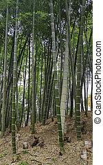 lugar, bambú, famoso, arashiyama, bosque, kyoto