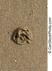 Lugworm cast. - Granular sandy beach with a lugworm,...