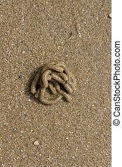 Granular sandy beach with a lugworm, Arenicola marina, cast in tubular coils.