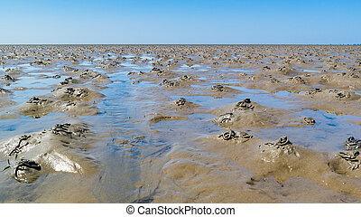 Lugworm casts on mudflats of Waddensea at low tide, Netherlands