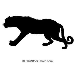 luipaard, silhouette