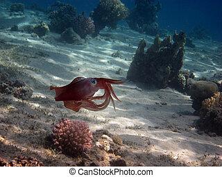 lula, recife, vermelho