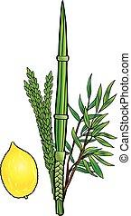 Lulav and Etrog isolated Sukkot festival traditional symbols, Jewish Holiday vector illustration