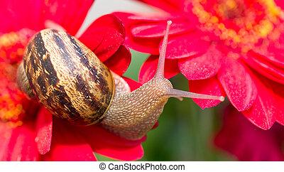 lumaca, trasloco, uno, fiore rosso