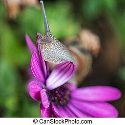 lumaca, trasloco, uno, fiore viola