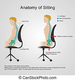 lumbar regio. Anatomy of sitting - The lumbar region is...