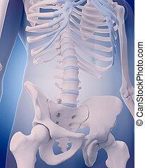 lumbar spine - medically accurate illustration - lumbar...