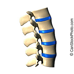 Lumbar Spine - Side view - Lumbar Spine - Lateral view -...