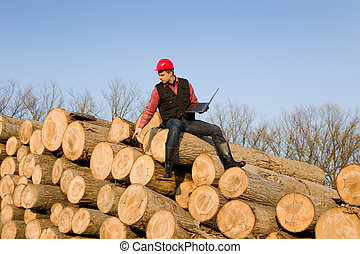 Lumber engineer - Young lumber engineer sitting with laptop...