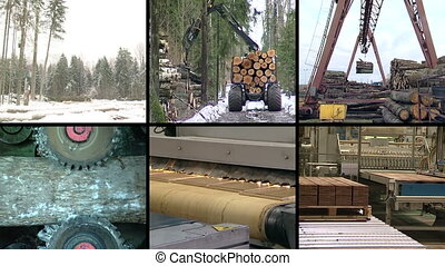 lumber industry collage - Timber and lumber industry. Tree...