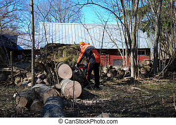 Lumberjack at a wind fallen tree