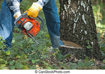 Lumberjack cuts down the tree by the chainsaw