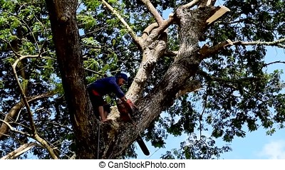 Lumberjack cuts huge tree branch with chainsaw on tree top -...