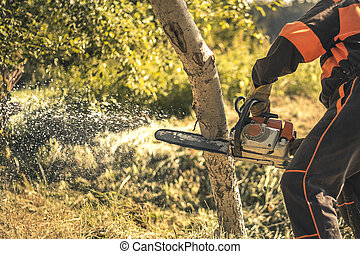 Lumberjack cutting tree with a chainsaw