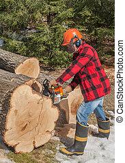 Lumberjack cutting wood
