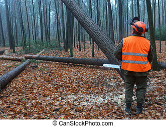 Forestry worker - lumberjack cutting tree